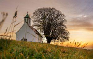 포도나무교회